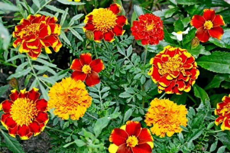 15 растений, которые цветут до зимы