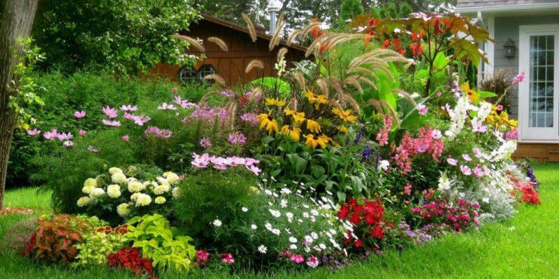 Неприхотливые и долгоцветущие цветы для сада