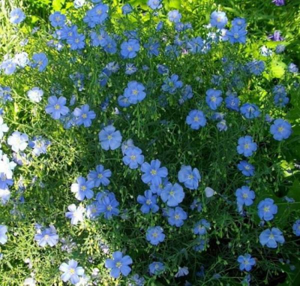 Цветы для сада: неприхотливые и долгоцветущие растения