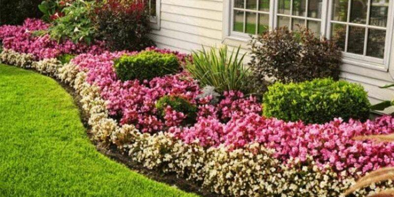 Цветы для клумбы, которые цветут все лето