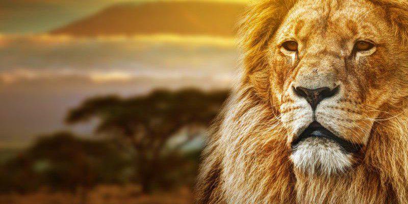 Почему Львы помнят обиды и как с ними дружить