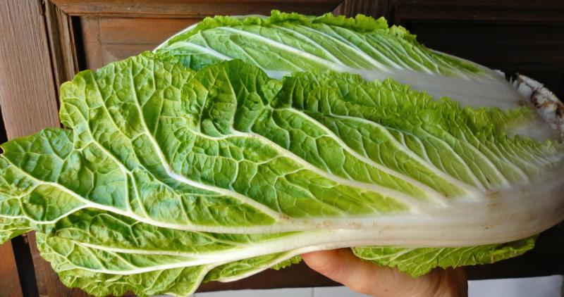 Как вкусно приготовить пекинскую капусту: важные нюансы плюс рецепты обалденных закусок