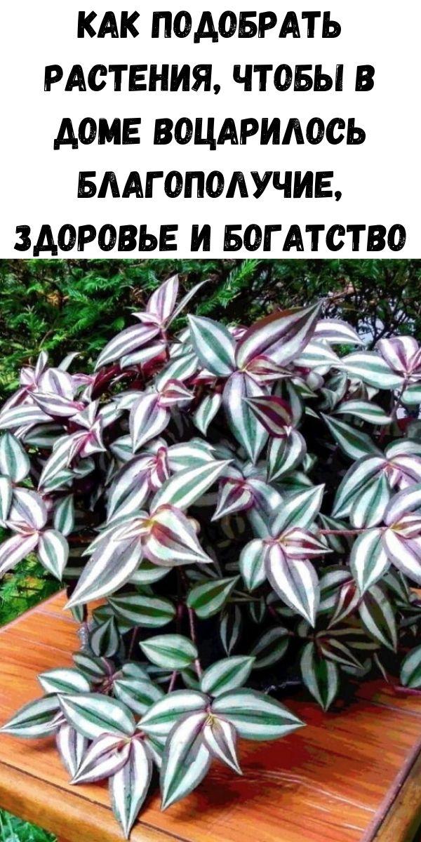 Как подобрать растения, чтобы в доме воцарилось благополучие, здоровье и богатство