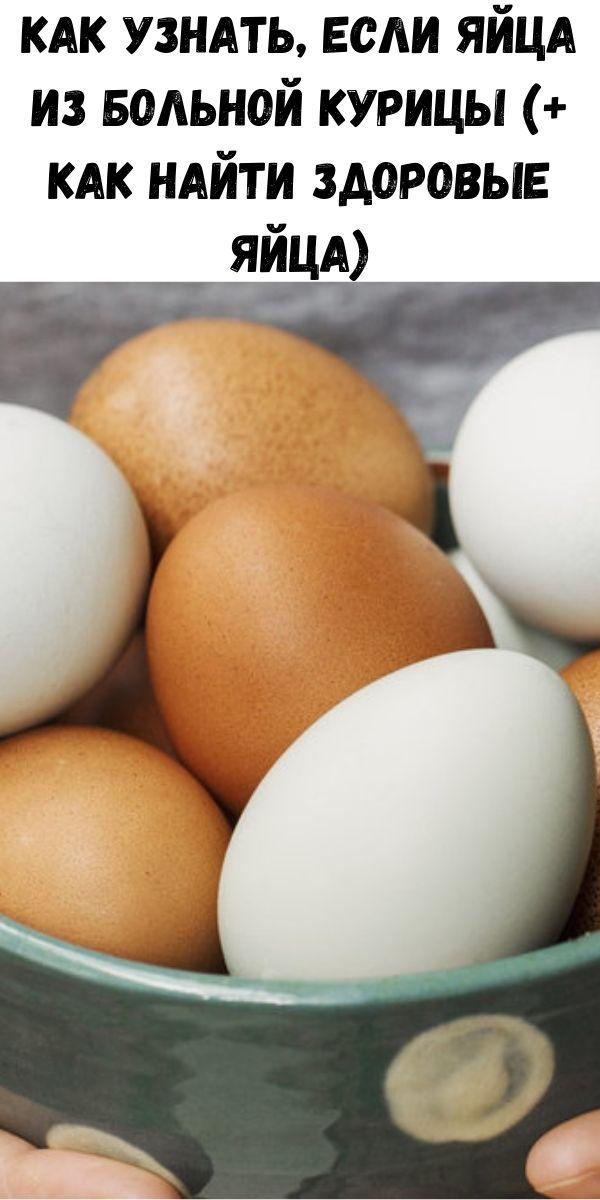 Как узнать, если яйца из больной курицы (+ как найти здоровые яйца)