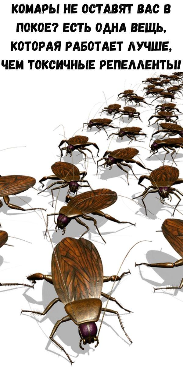 Комары не оставят вас в покое? Есть одна вещь, которая работает лучше, чем токсичные репелленты!