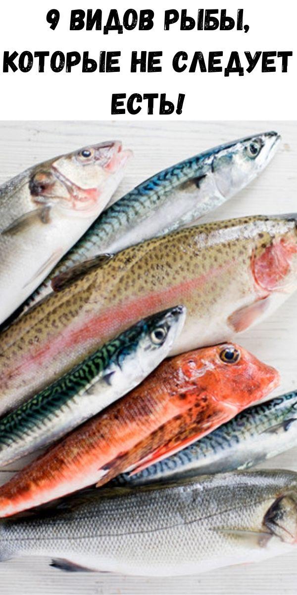 9 видов рыбы, которые не следует есть!