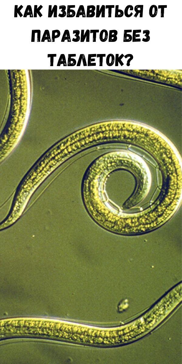 Как избавиться от паразитов без таблеток?