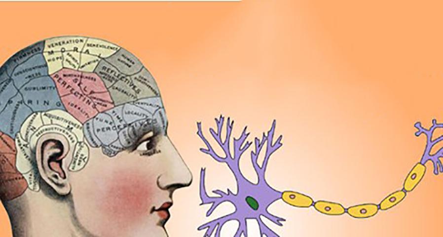 7 способов роста новых клеток мозга независимо от вашего возраста!