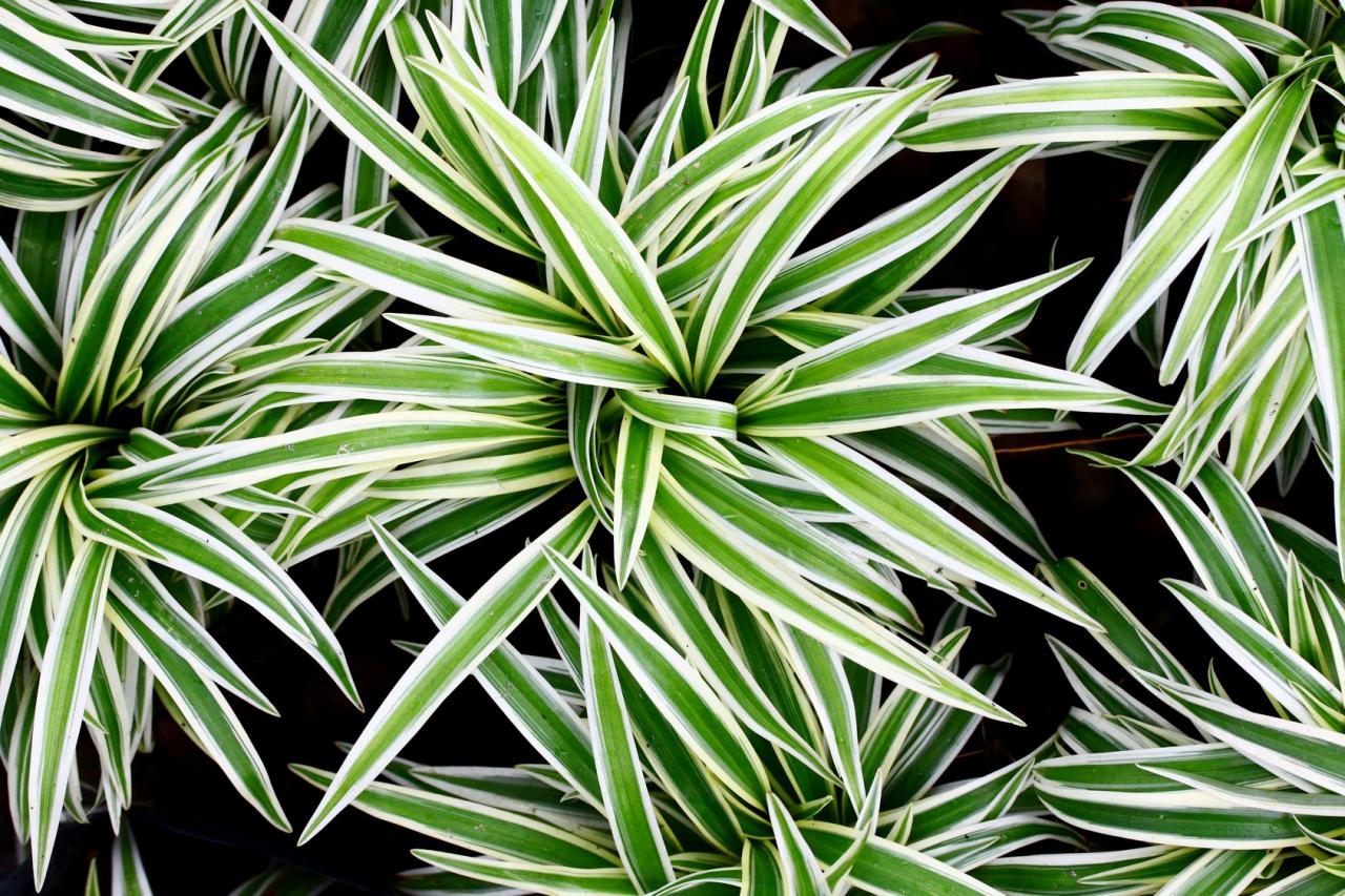 12 лучших растений для очистки воздуха в помещении
