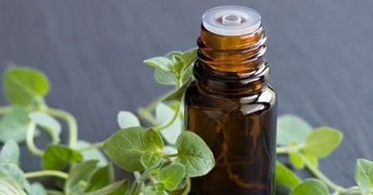 Преимущества масла орегано для лечения инфекций, грибка и даже простуды